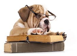 Bookworm Bulldog