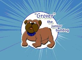 """Grover"" the junior bulldog"